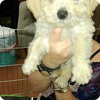 Adopt A Pet :: Chrissy - Thousand Oaks, CA