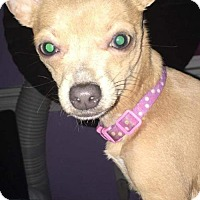 Adopt A Pet :: Prada *I only weigh 4 1/2 lbs!* - Florence, KY