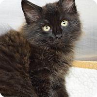 Adopt A Pet :: Abu - Dublin, CA