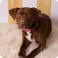Adopt A Pet :: Kashi - Pittsburg, CA