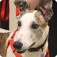 Adopt A Pet :: Cheerio - Tucson, AZ