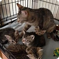 Adopt A Pet :: Sarah - Alamo, CA