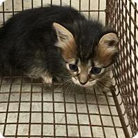 Adopt A Pet :: Fire cracker - New Braunfels, TX