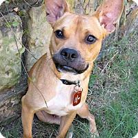Adopt A Pet :: Jay Jay - McKinney, TX