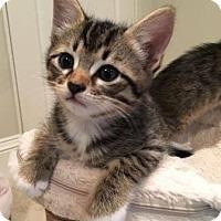 Adopt A Pet :: Zimba - Richardson, TX