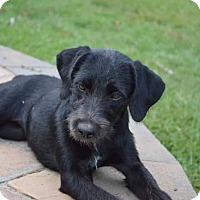 Adopt A Pet :: Marie - pending - Manchester, NH