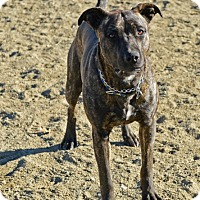 Adopt A Pet :: Sue - Gardnerville, NV