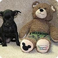 Adopt A Pet :: Coleman - Foster, RI