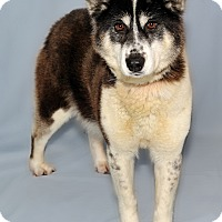 Adopt A Pet :: Tundra - Gatineau, QC