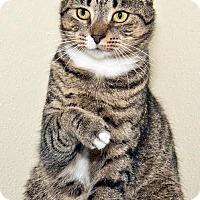 Adopt A Pet :: Pheonix - Cashiers, NC