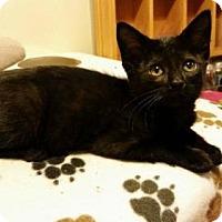 Adopt A Pet :: Saralynn - Hockessin, DE