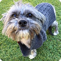 Adopt A Pet :: Bitsy - Los Angeles, CA