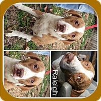 Adopt A Pet :: RALEIGH - Malvern, AR