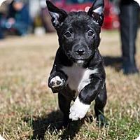 Adopt A Pet :: Marlo - Woodstock, GA