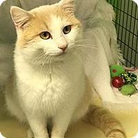 Adopt A Pet :: Phil - Jasper, IN