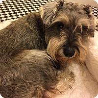 Adopt A Pet :: Sunny - Redondo Beach, CA