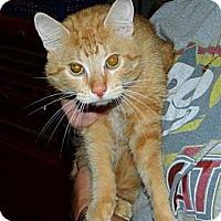 Adopt A Pet :: Morris - Troy, OH