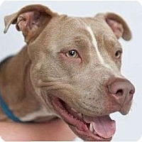 Adopt A Pet :: Mya - Orlando, FL