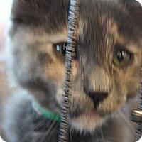 Adopt A Pet :: Clementine - Santa Monica, CA