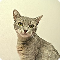 Adopt A Pet :: Melina - Foothill Ranch, CA
