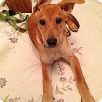 Adopt A Pet :: Sadie (fostered in GA) - Cranston, RI