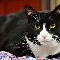 Adopt A Pet :: Delphi - Santa Fe, NM