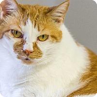 Adopt A Pet :: Josie - Chesapeake, VA