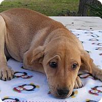 Adopt A Pet :: Frosty - Floresville, TX