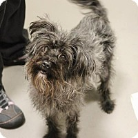 Adopt A Pet :: Whimsy - Smyrna, GA