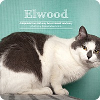 Adopt A Pet :: Ellwood - Salem, OH