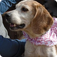 Adopt A Pet :: Joy - Apple Valley, CA