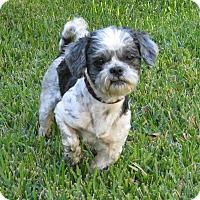 Adopt A Pet :: Harold Hunter - Jersey City, NJ