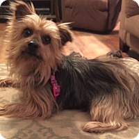 Adopt A Pet :: Tinkerbell - Starkville, MS