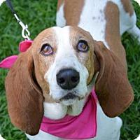 Adopt A Pet :: Maggie #2 - Lafayette, LA
