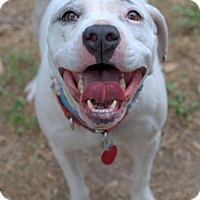 Adopt A Pet :: Serena - College Station, TX