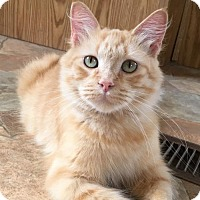Adopt A Pet :: Oakley - Siren, WI