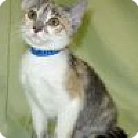 Adopt A Pet :: Rileigh - Powell, OH