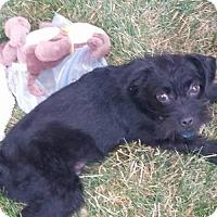 Adopt A Pet :: Winks - Mukwonago, WI