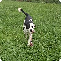 Adopt A Pet :: Esme~meet me! - Glastonbury, CT