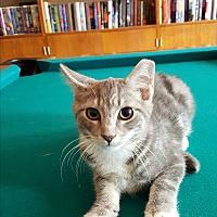 Adopt A Pet :: Grainger/Graine - East Windsor, NJ
