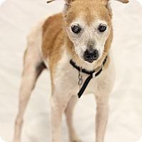 Adopt A Pet :: Buster - Bradenton, FL