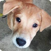Adopt A Pet :: Sneezy - Denver, CO