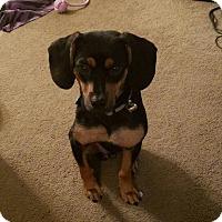 Adopt A Pet :: Ethan - Racine, WI