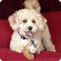 Adopt A Pet :: Bijou - Alpharetta, GA