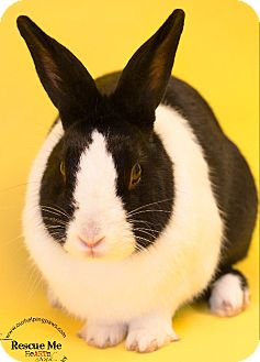 Mini Rex Mix for adoption in Washburn, Wisconsin - Franklin