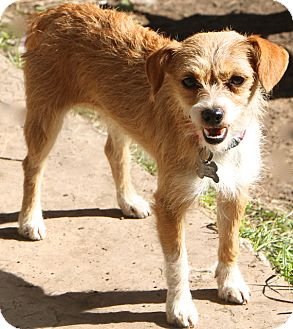 Terrier (Unknown Type, Small) Mix Dog for adoption in Woonsocket, Rhode Island - Donatella