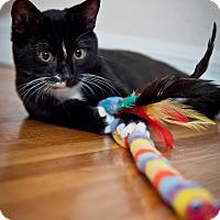 Adopt A Pet :: Wasabi - Los Angeles, CA