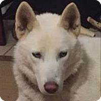 Adopt A Pet :: 16-12-3754 Luna - Dallas, GA