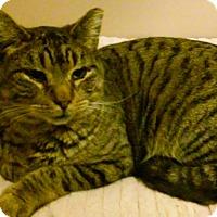 Adopt A Pet :: Elbee - Brightwaters,, NY