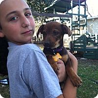 Adopt A Pet :: Polly - Boerne, TX